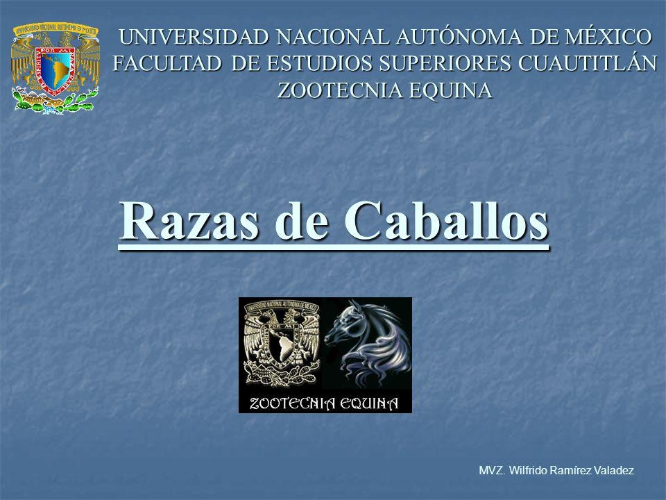 MVZ. Wilfrido Ramírez Valadez
