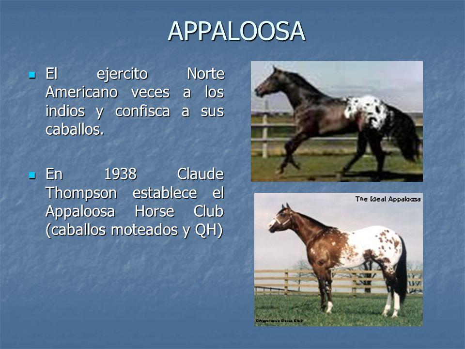 APPALOOSA El ejercito Norte Americano veces a los indios y confisca a sus caballos.
