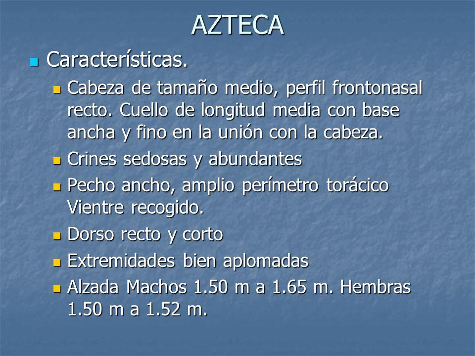 AZTECA Características.