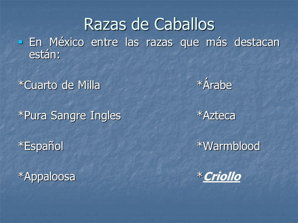 Razas de Caballos En México entre las razas que más destacan están:
