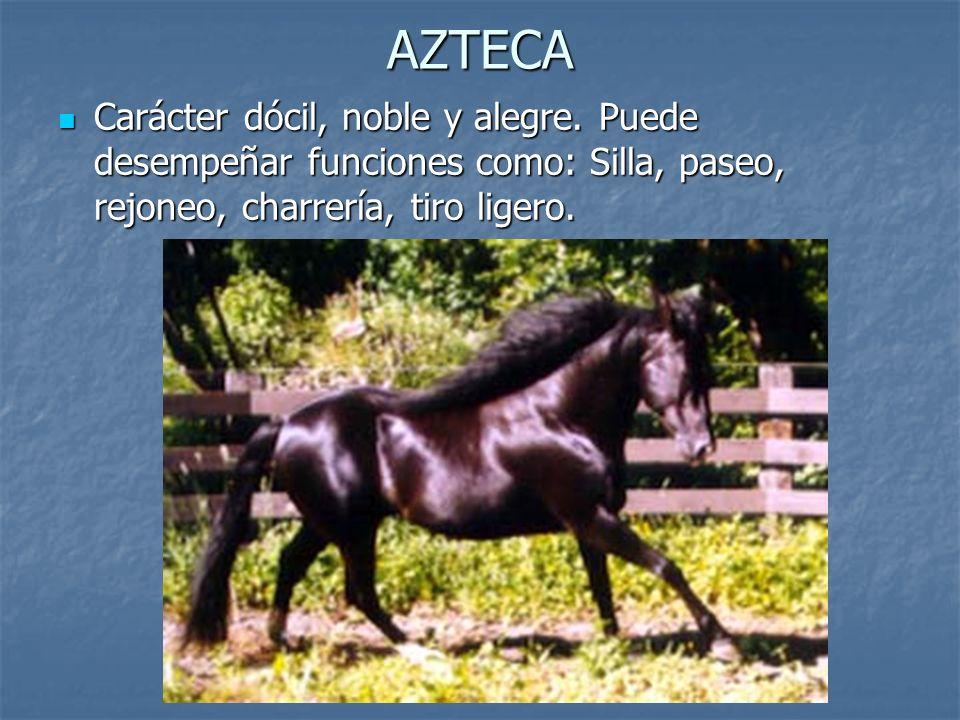 AZTECA Carácter dócil, noble y alegre.