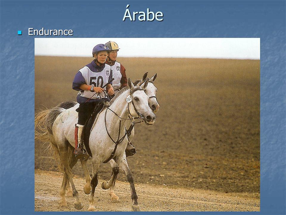 Árabe Endurance