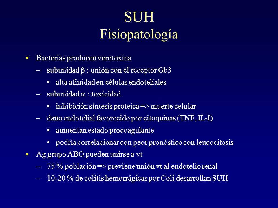 SUH Fisiopatología Bacterias producen verotoxina