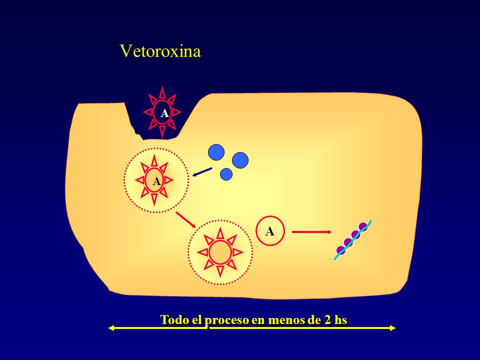 Vetoroxina A Todo el proceso en menos de 2 hs