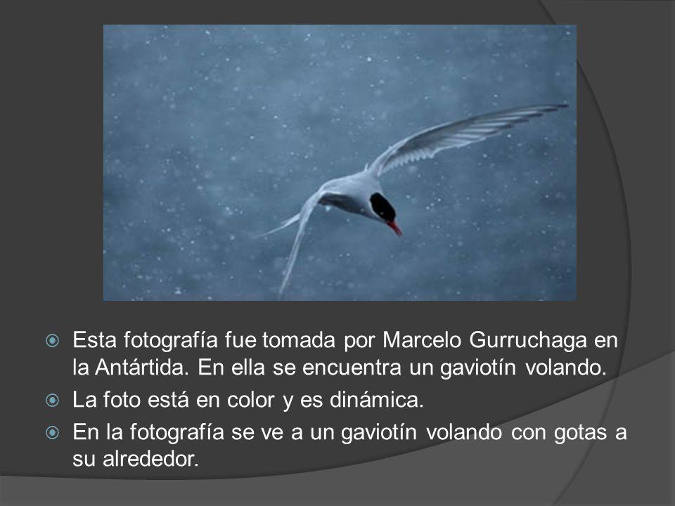 Esta fotografía fue tomada por Marcelo Gurruchaga en la Antártida