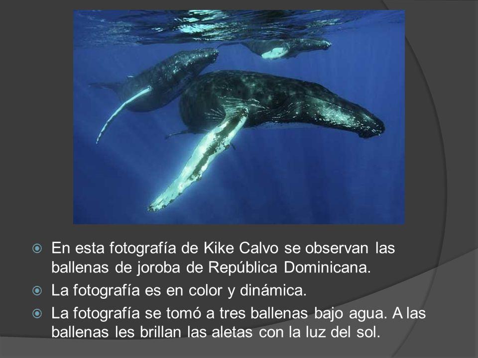 En esta fotografía de Kike Calvo se observan las ballenas de joroba de República Dominicana.