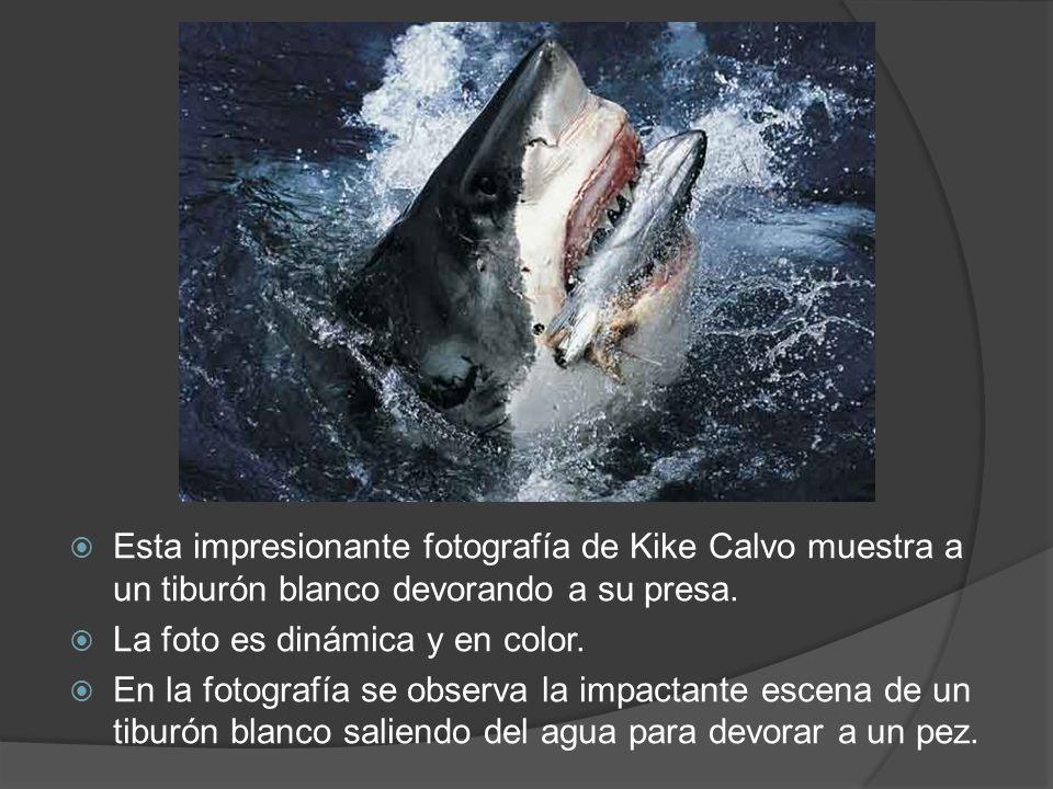 Esta impresionante fotografía de Kike Calvo muestra a un tiburón blanco devorando a su presa.
