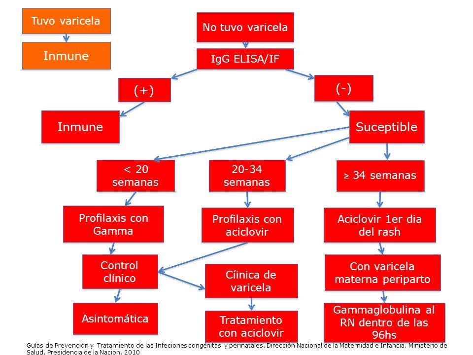 Inmune (+) (-) Inmune Suceptible Tuvo varicela No tuvo varicela