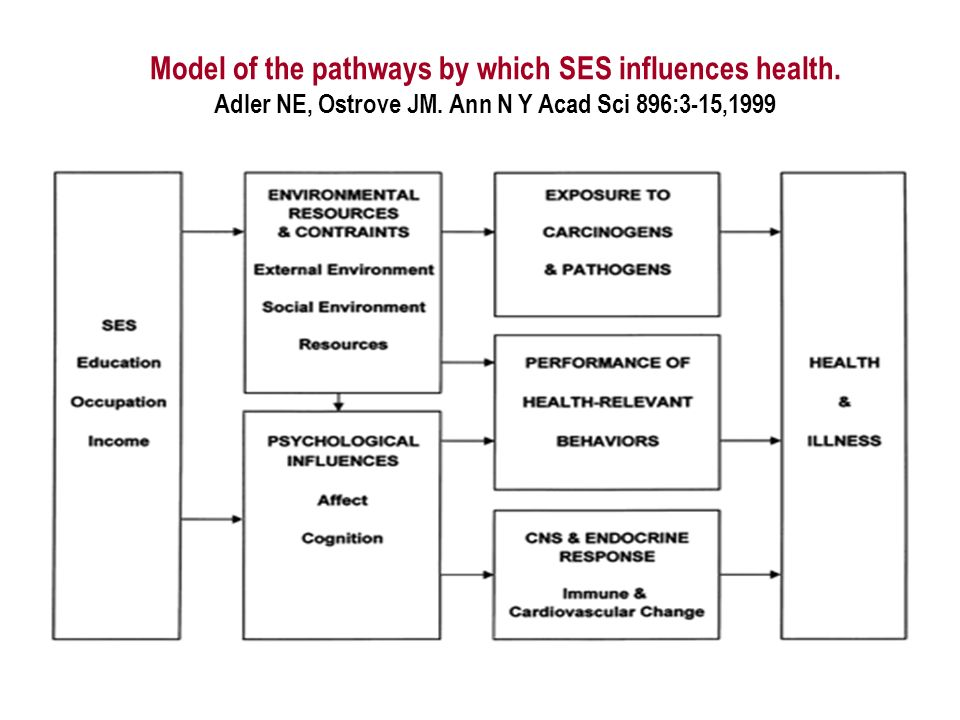 Model of the pathways by which SES influences health