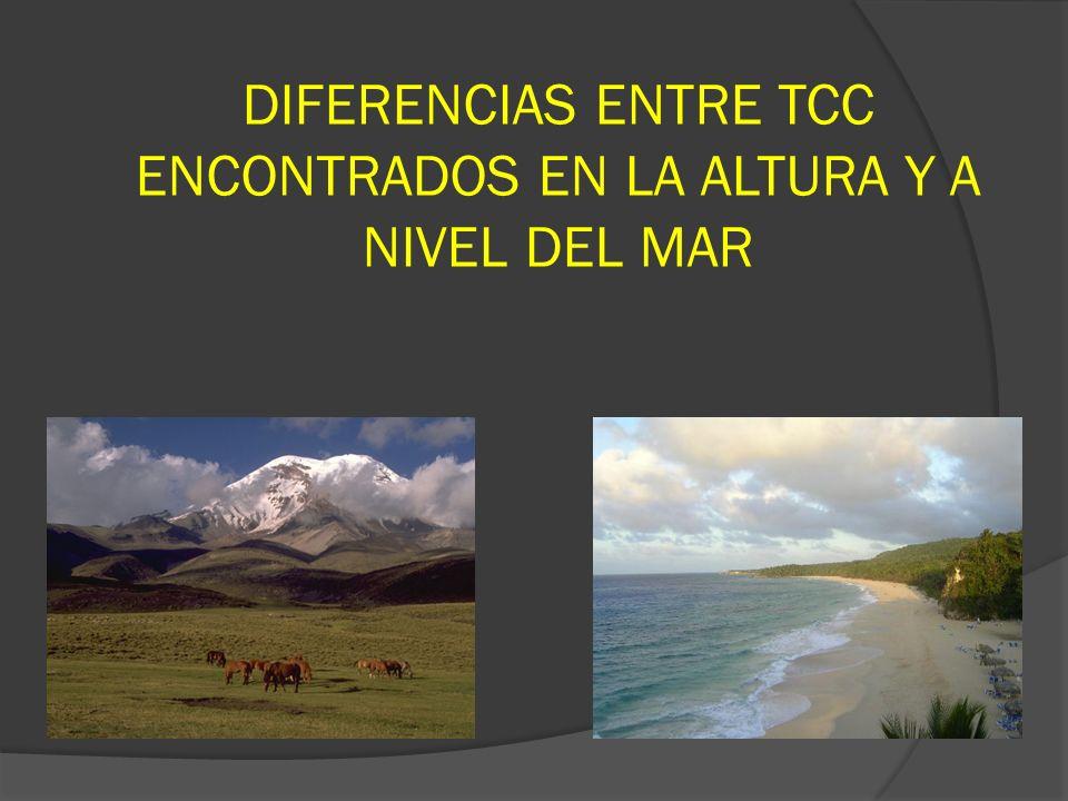 DIFERENCIAS ENTRE TCC ENCONTRADOS EN LA ALTURA Y A NIVEL DEL MAR