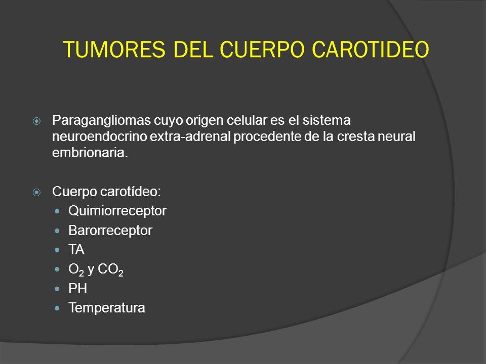 TUMORES DEL CUERPO CAROTIDEO