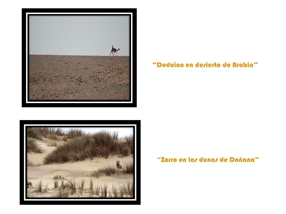 Deduino en desierto de Arabia