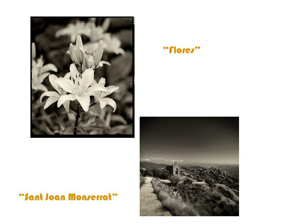 Flores Sant Joan Monserrat