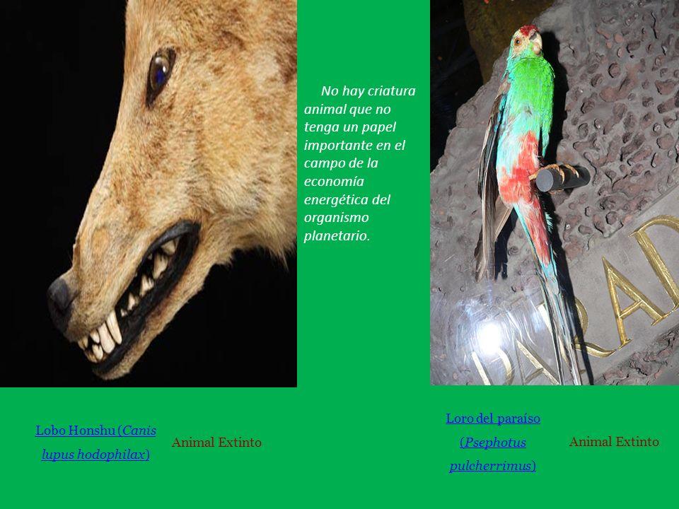 No hay criatura animal que no tenga un papel importante en el campo de la economía energética del organismo planetario.