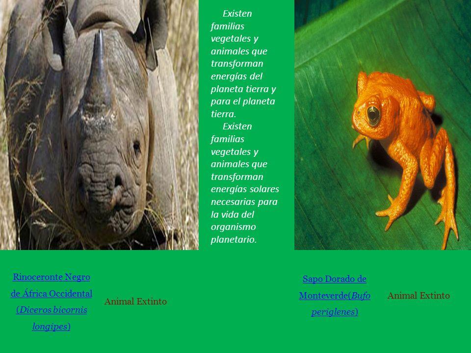 Existen familias vegetales y animales que transforman energías del planeta tierra y para el planeta tierra.