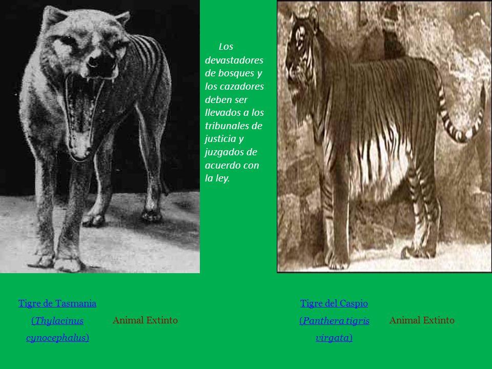 Los devastadores de bosques y los cazadores deben ser llevados a los tribunales de justicia y juzgados de acuerdo con la ley.