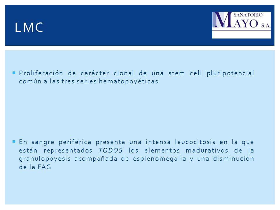 LMC Proliferación de carácter clonal de una stem cell pluripotencial común a las tres series hematopoyéticas.