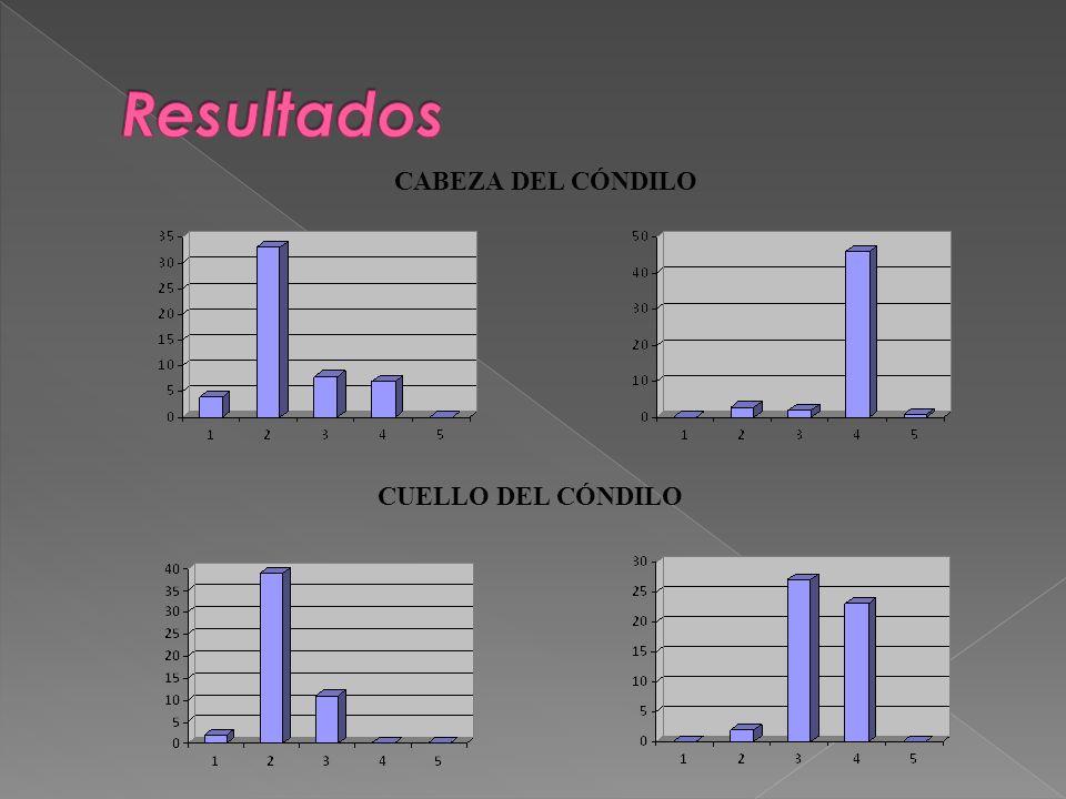 Resultados CABEZA DEL CÓNDILO CUELLO DEL CÓNDILO