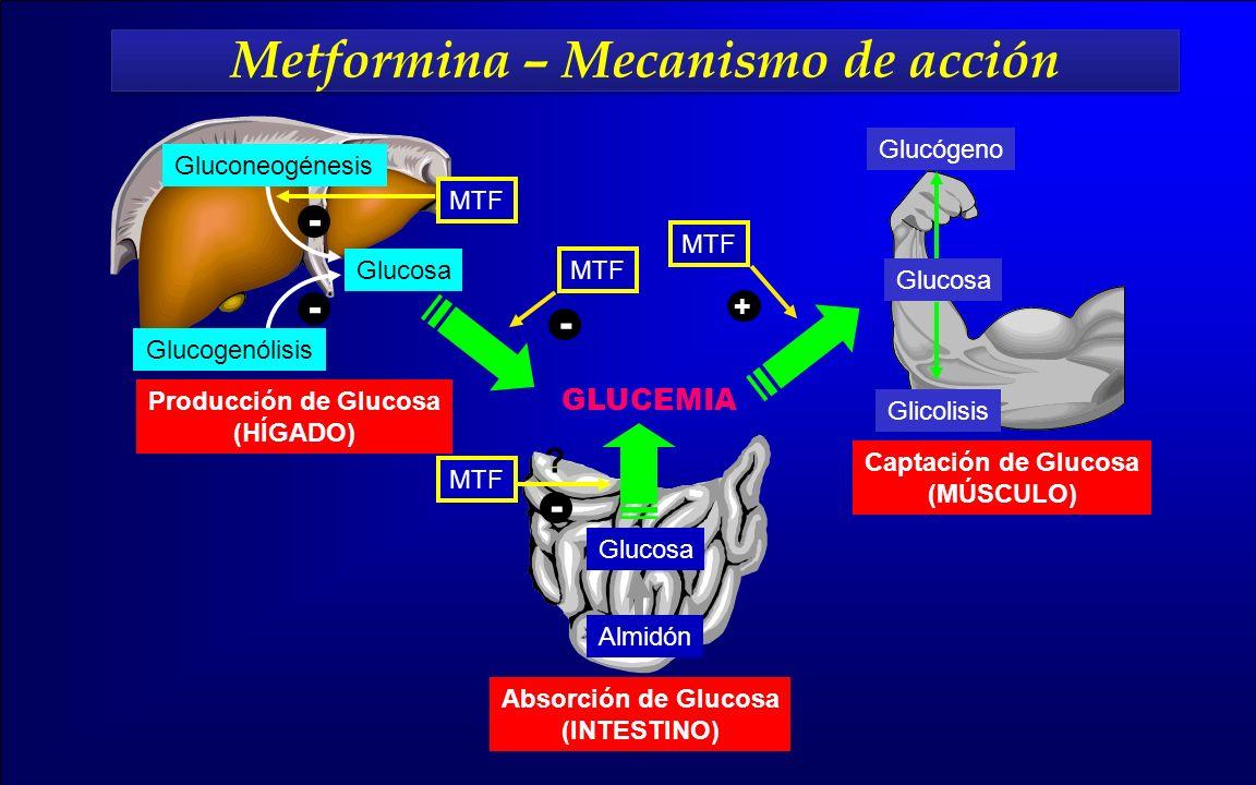 Metformina – Mecanismo de acción