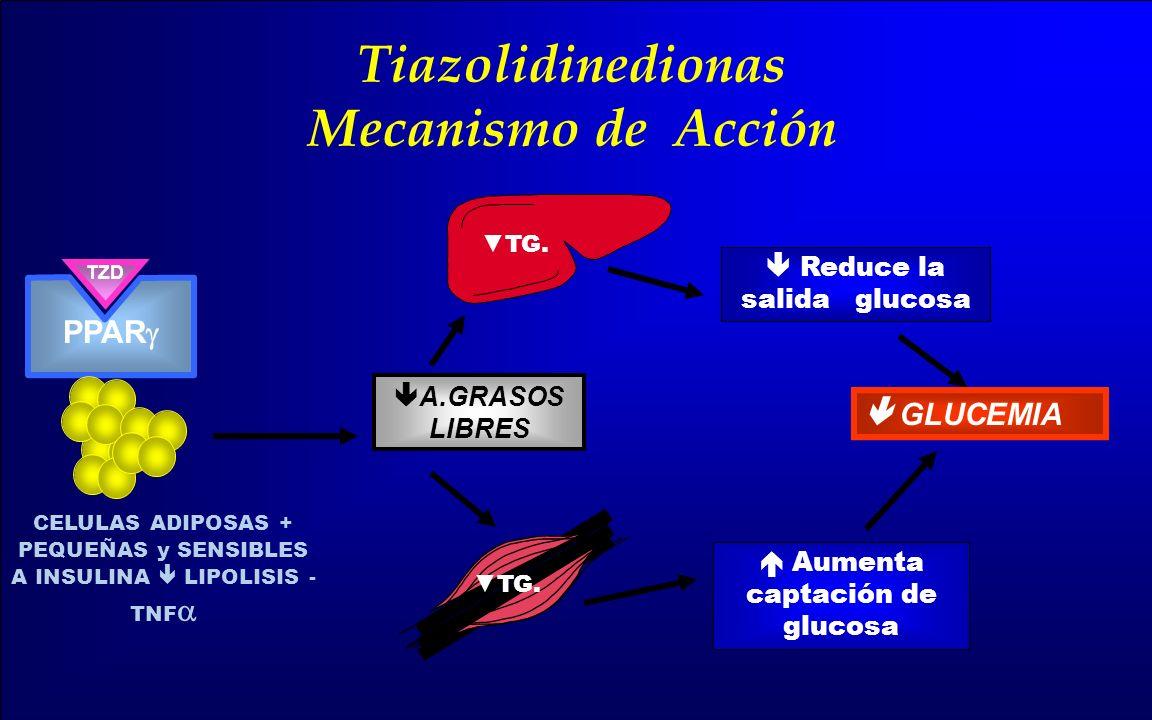Tiazolidinedionas Mecanismo de Acción
