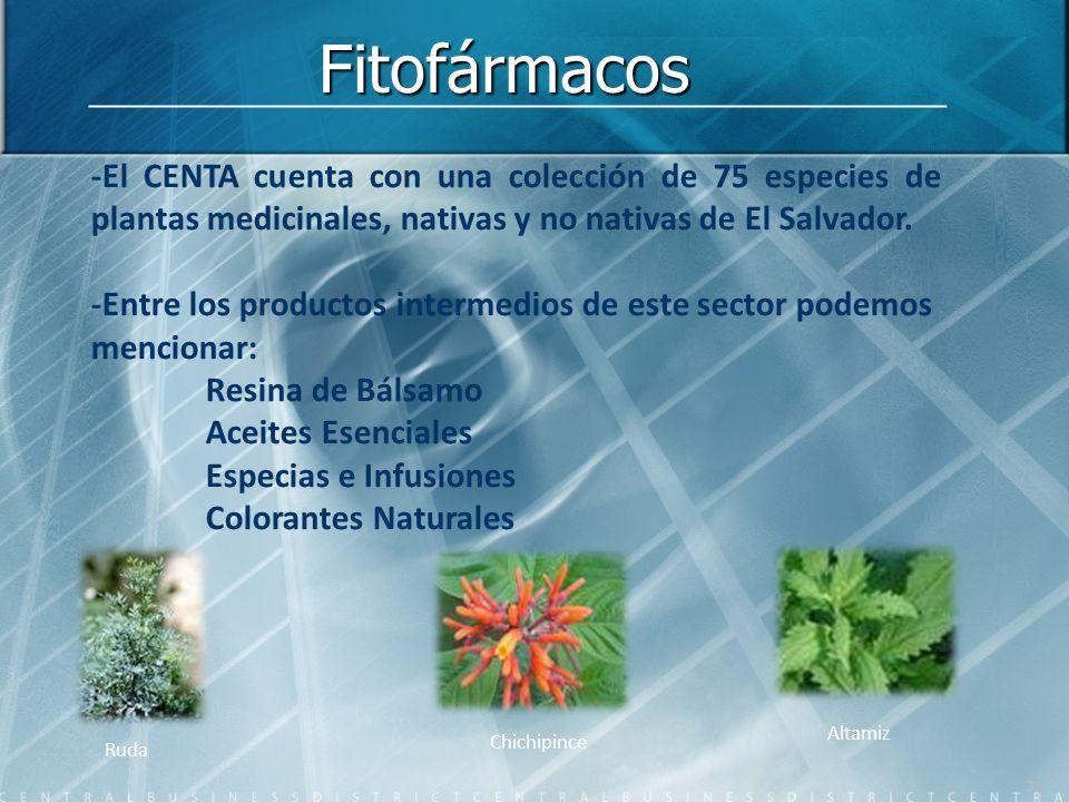 Fitofármacos -El CENTA cuenta con una colección de 75 especies de plantas medicinales, nativas y no nativas de El Salvador.