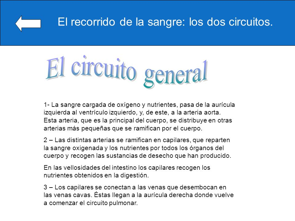 Circuito Circulatorio : Examen de cono bruno ppt video online descargar