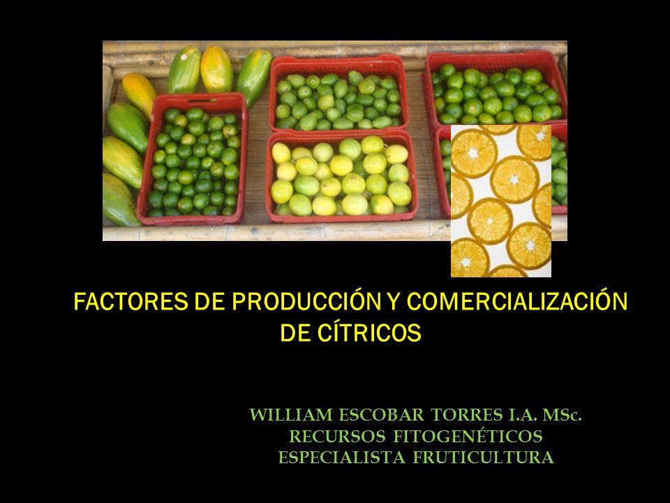 FACTORES DE PRODUCCIÓN Y COMERCIALIZACIÓN DE CÍTRICOS