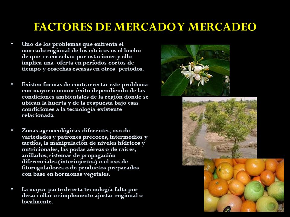 FACTORES DE MERCADO Y MERCADEO