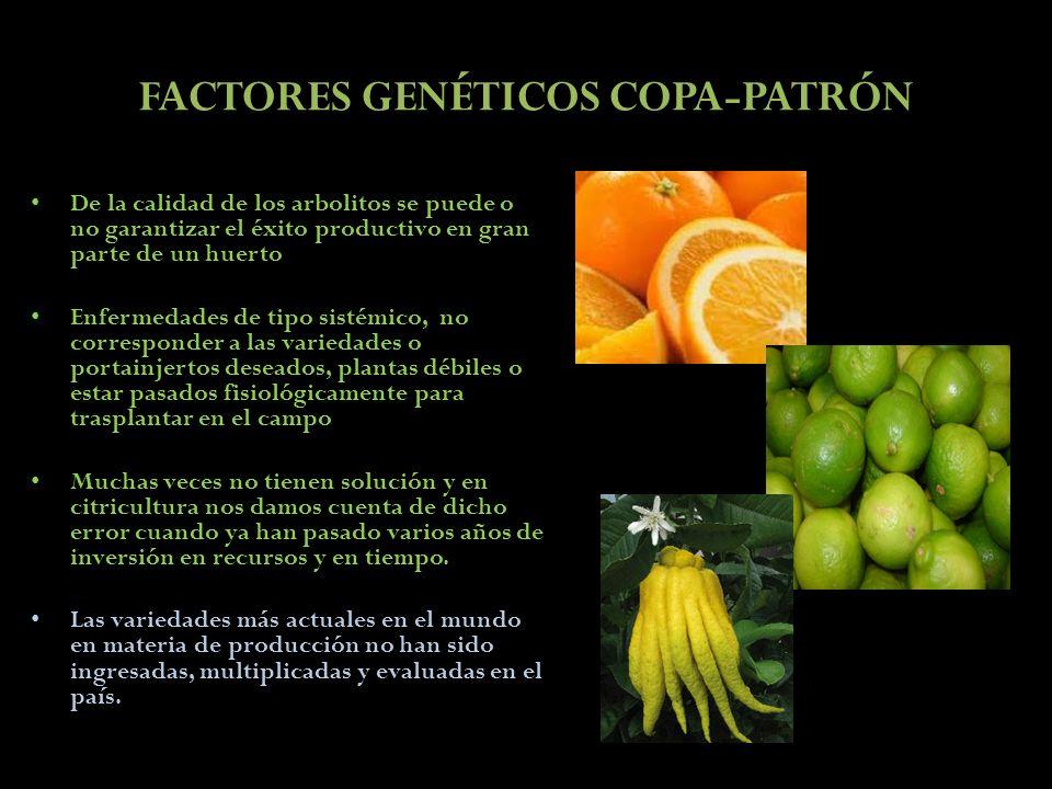 FACTORES GENÉTICOS COPA-PATRÓN