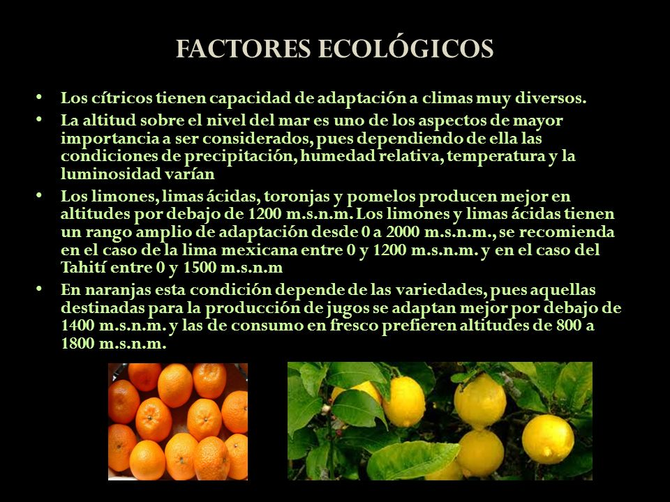 FACTORES ECOLÓGICOSLos cítricos tienen capacidad de adaptación a climas muy diversos.