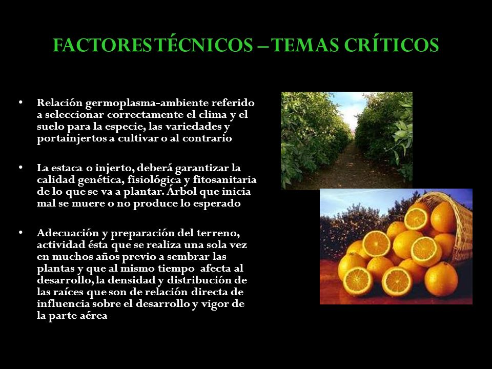 Factores de producci n y comercializaci n de c tricos for Factores para seleccionar el terreno para el vivero