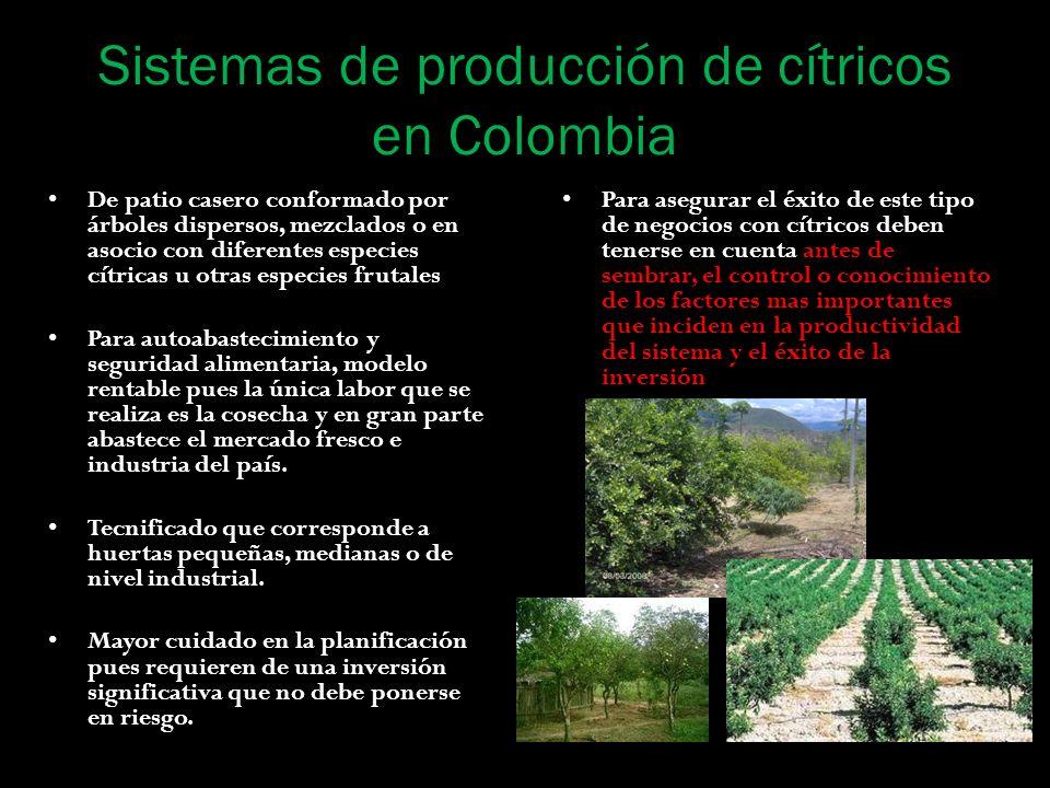 Sistemas de producción de cítricos en Colombia