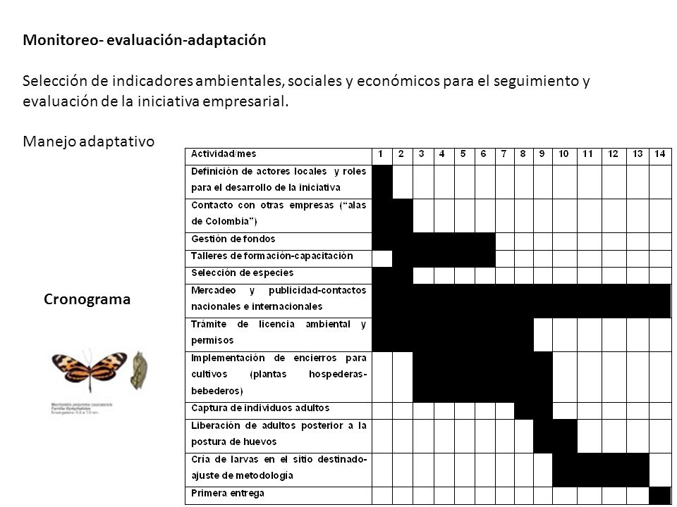 Monitoreo- evaluación-adaptación