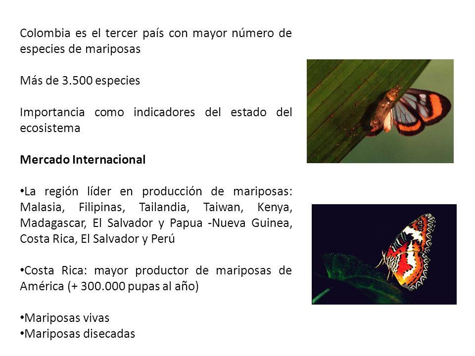 Colombia es el tercer país con mayor número de especies de mariposas
