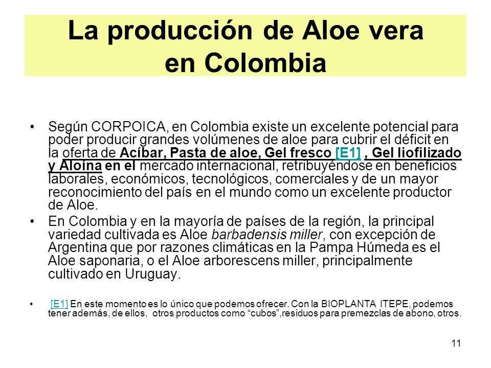La producción de Aloe vera en Colombia