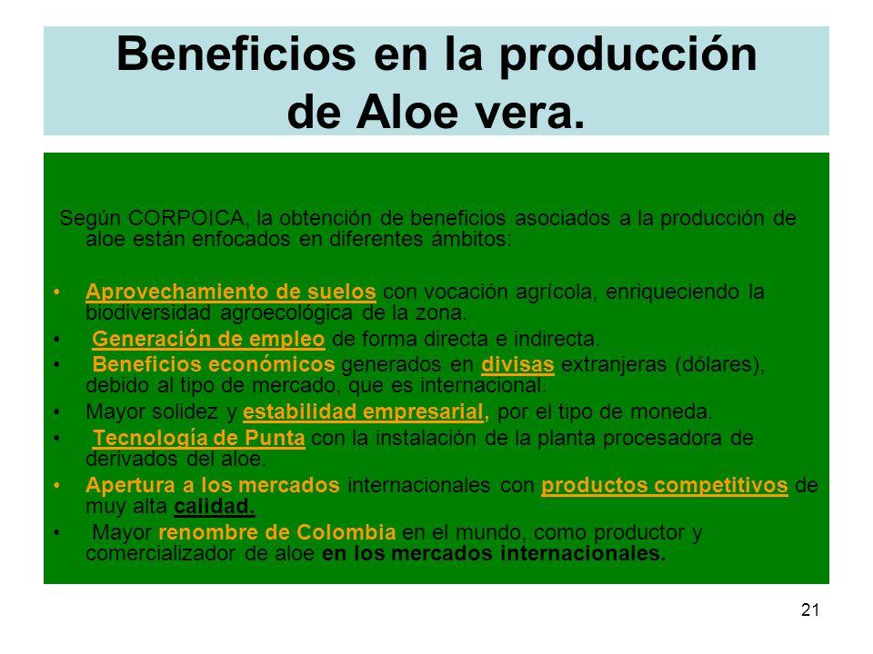 Beneficios en la producción de Aloe vera.
