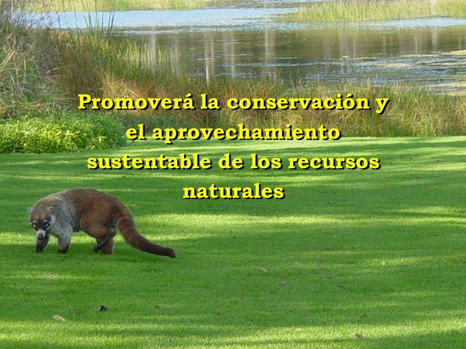 Promoverá la conservación y el aprovechamiento sustentable de los recursos naturales
