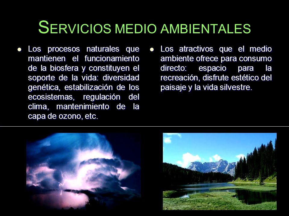 SERVICIOS MEDIO AMBIENTALES