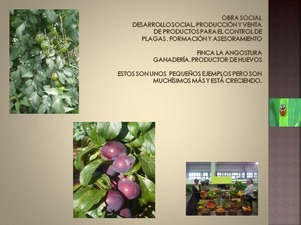 Obra social desarrollo social, producción y VENTA de productos para el control de plagas .