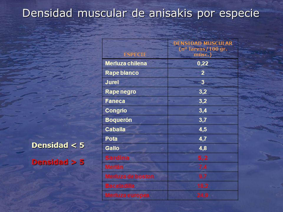 Densidad muscular de anisakis por especie