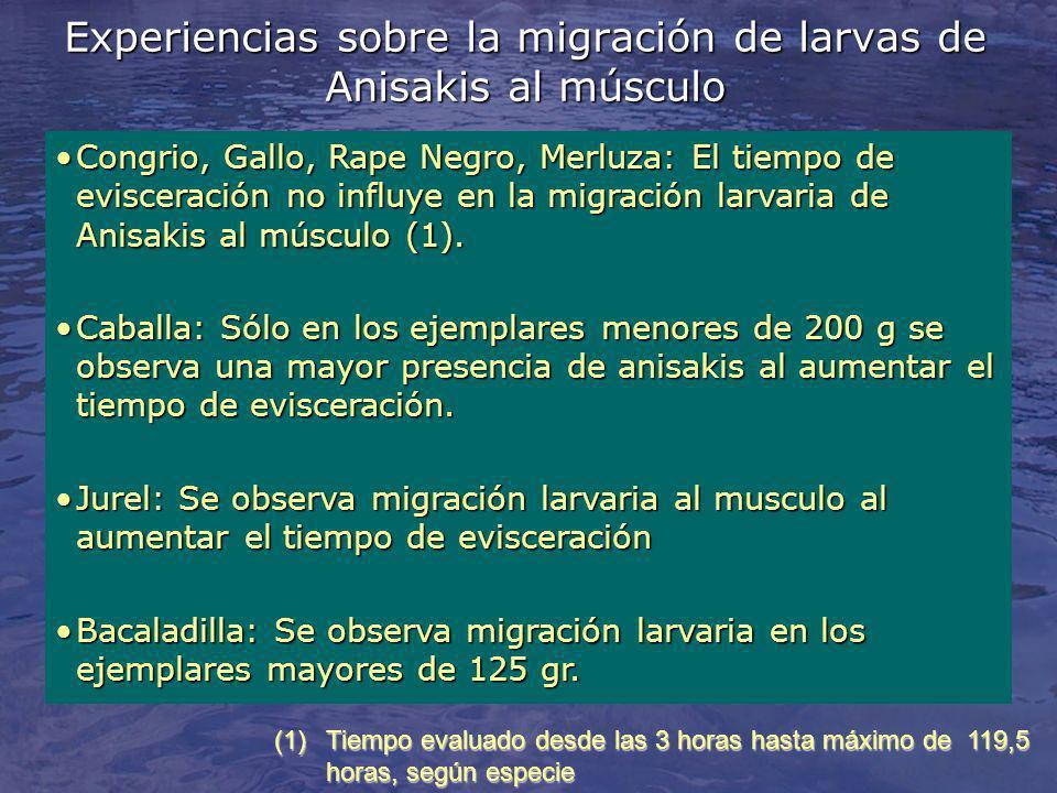 Experiencias sobre la migración de larvas de Anisakis al músculo