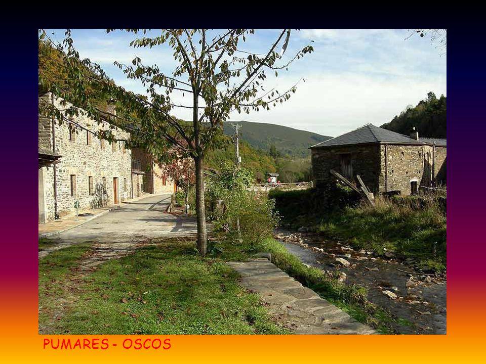 PUMARES - OSCOS