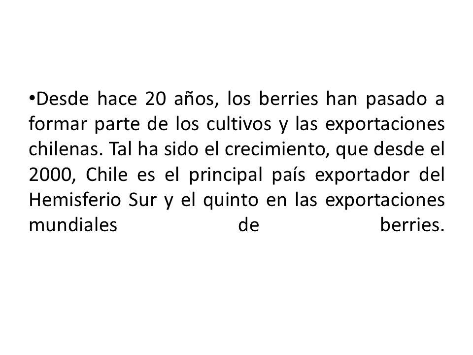 Desde hace 20 años, los berries han pasado a formar parte de los cultivos y las exportaciones chilenas.