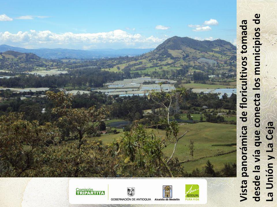 Vista panorámica de floricultivos tomada desde la vía que conecta los municipios de La Unión y La Ceja