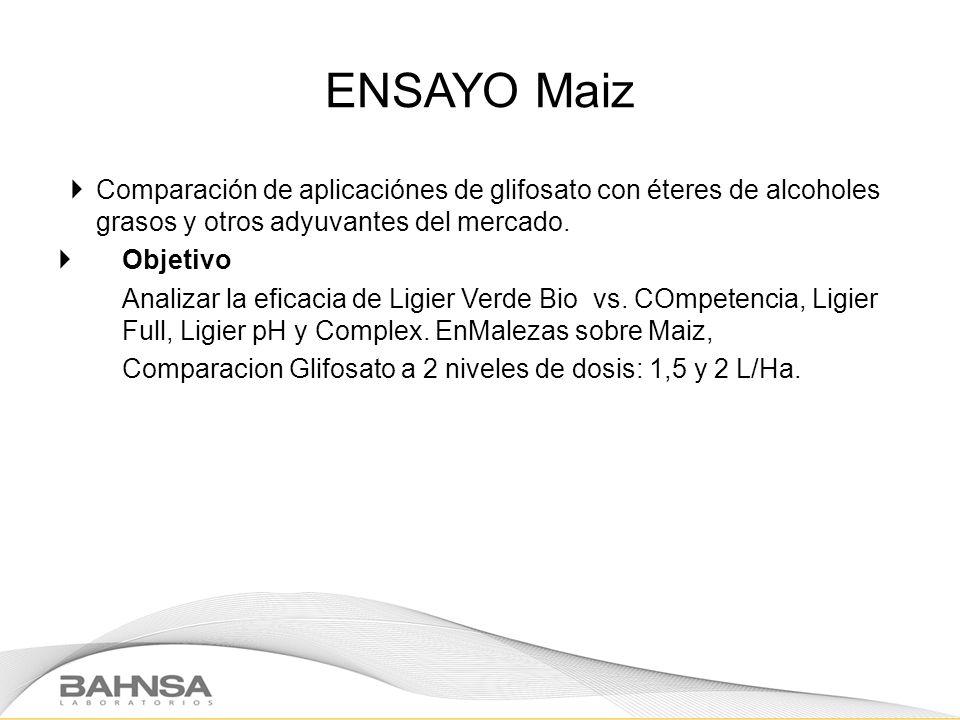 ENSAYO Maiz Comparación de aplicaciónes de glifosato con éteres de alcoholes grasos y otros adyuvantes del mercado.