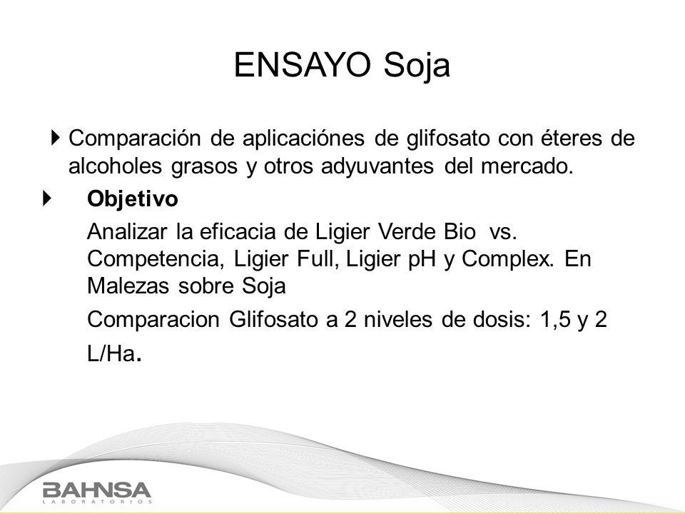 ENSAYO Soja Comparación de aplicaciónes de glifosato con éteres de alcoholes grasos y otros adyuvantes del mercado.