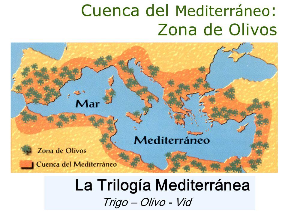 Cuenca del Mediterráneo: Zona de Olivos