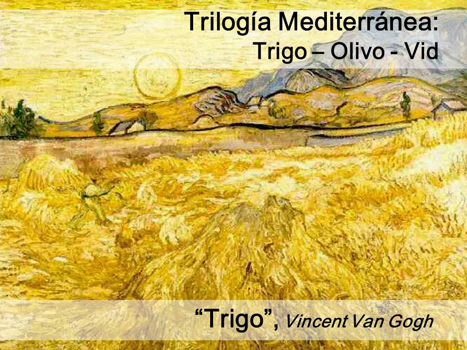 Trilogía Mediterránea: Trigo – Olivo - Vid