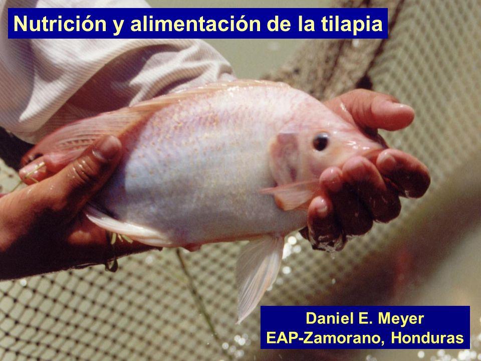 EAP-Zamorano, Honduras