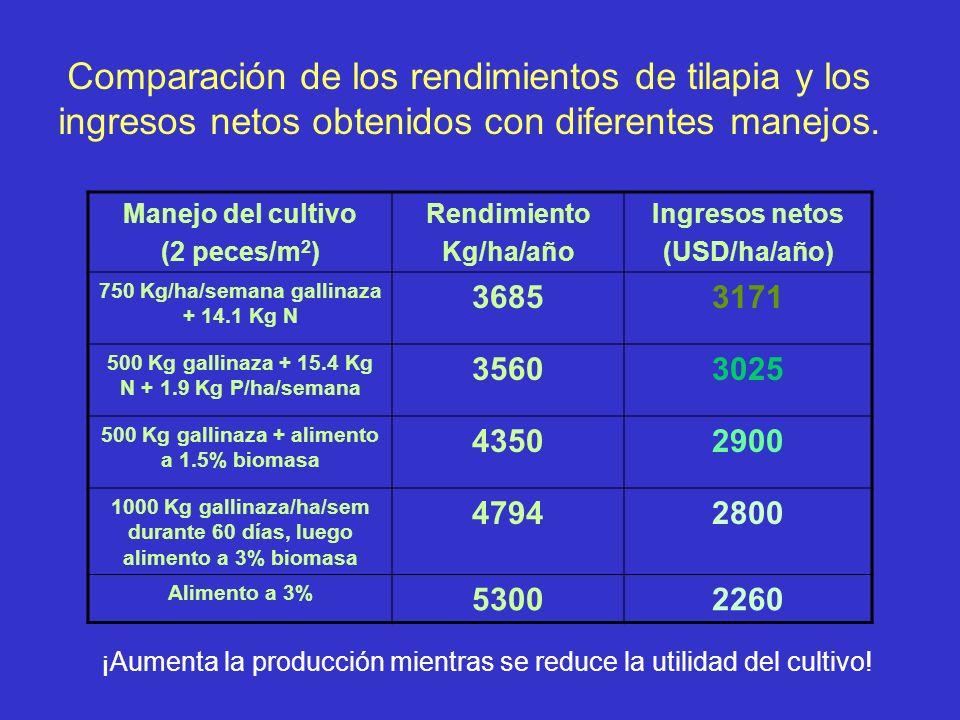 Comparación de los rendimientos de tilapia y los